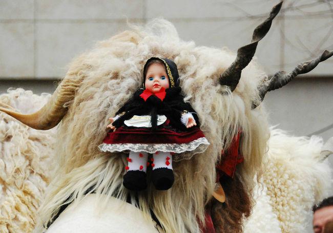 Busó Busójárás Mohács Casual Clothing Childhood Cute Doll Head And Shoulders Mohács Person Portrait