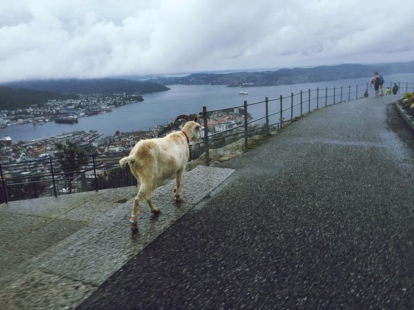 Check This Out Goat Bergen Taking Photos Enjoying Life Hanging Out Hello World That's Me