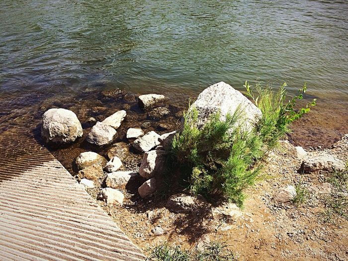 Plant and rock next to boat ramp next to the Colorado River. Beautiful Morning Walk✨ West Wetlands, Yuma, AZ Colorado River Boat Ramp IPhone Photography Water Nature Day Sunlight Beauty In Nature Plant No People Rock Growth Outdoors Sand Tranquil Scene