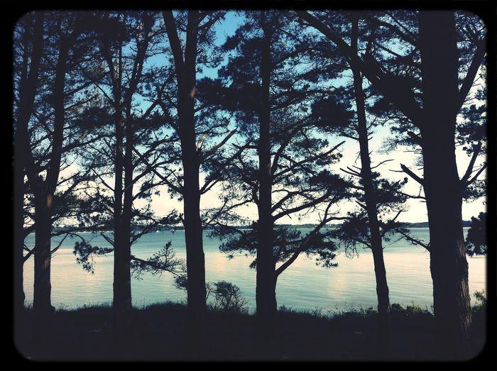 Sea Bretagne Forest