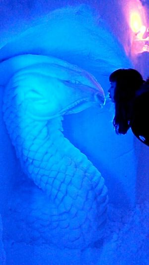 Dragon Kiss Kissing Snowkiss Dragonlove Snowlove Cold Love Cold Kiss Cold Temperature Icy Wonderland Icy Fantasy World Blue Colours Igloohotel Icecold Ice Hotel Cold Romantic Romantic Silent Moment Makes Me Smile Fairytale