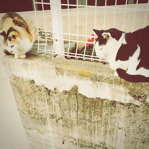 NIPPORI Cats ひなたぼっこ