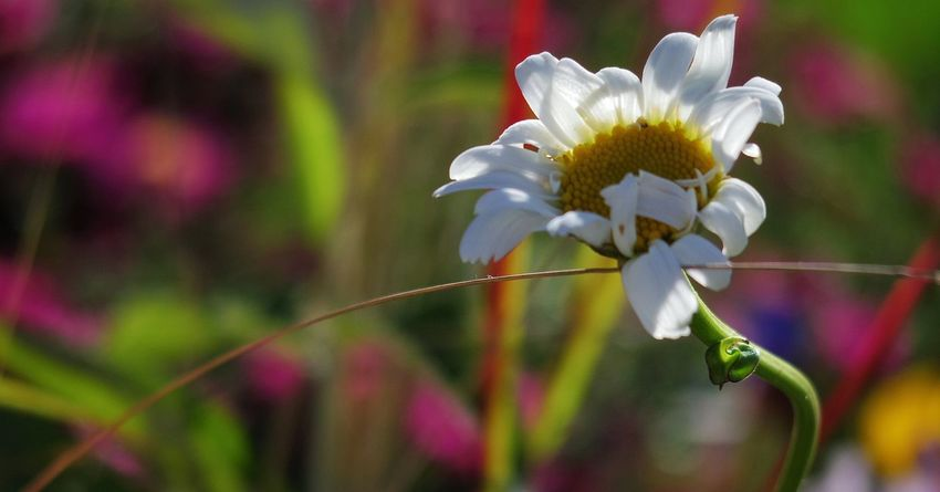 Good morning and afternoon everyone. May your weekend be all that you were waiting for and wanted it to be. Flower Flower Head Blurred Background Sunlight Focus On Subject Depth Of Field 2.8 Nature Beauty In Nature Photography
