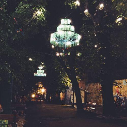 Tree Illuminated Night No People Outdoors Architecture Nature