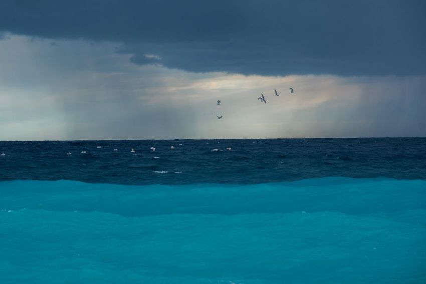 EyeEm Nature Lover Turquoise Sea Colours Stormy Sea Storm Cloud Stormy Weather Sea Horizon Over Water Sky Beauty In Nature Cloud - Sky Water Scenics Bird Flying Tranquil Scene Tranquility Nature No People