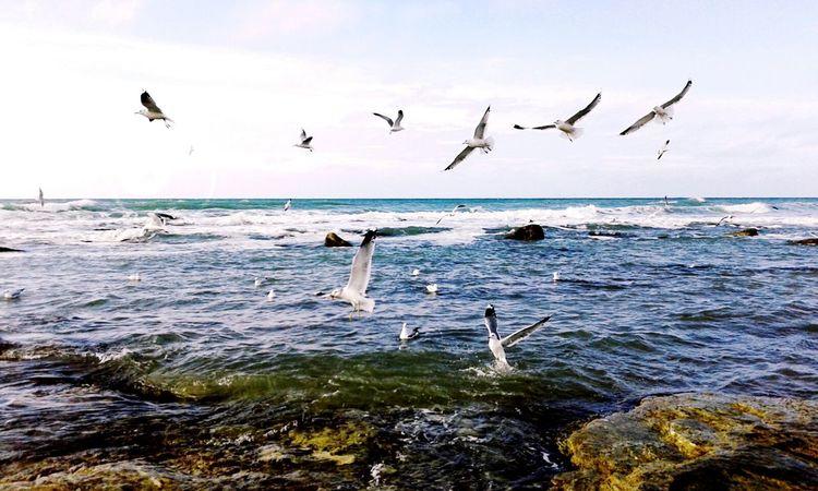 Kaspian Sea Birds Sea