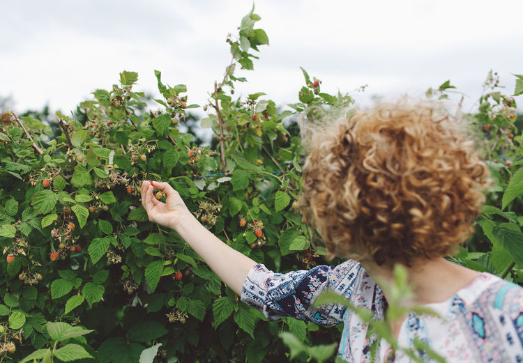 WOMAN PICKING RIPE STRAWBERRIES