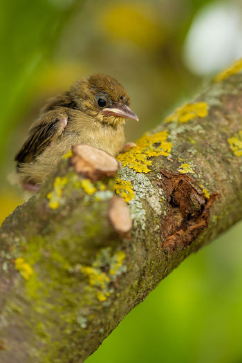 Close-up of a bird on tree trunk