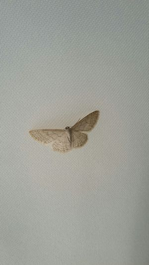 Burterfly