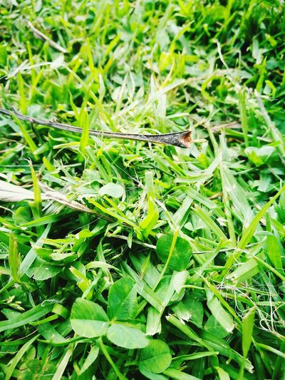 LIFE........ Nature Green Color Outdoors Leaf Grass Close-up Animal Themes Green Color Nature Animals In The Wild Insect One Animal Grass No People Leaf Growth Outdoors Animal Wildlife Close-up Beauty In Nature Day Grasshopper First Eyeem Photo