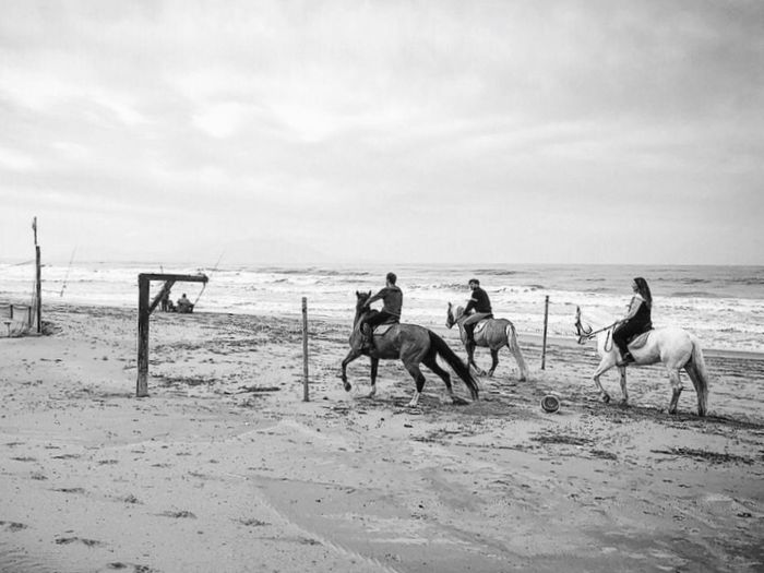 Horses Lido Gallo Horses Land Beach Sky Sea Water Sand Domestic Animals