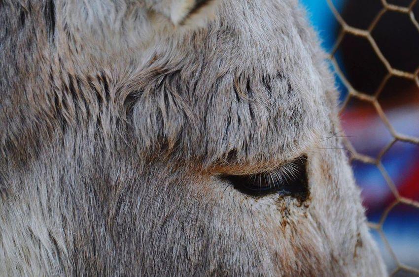 Donky Donkeys