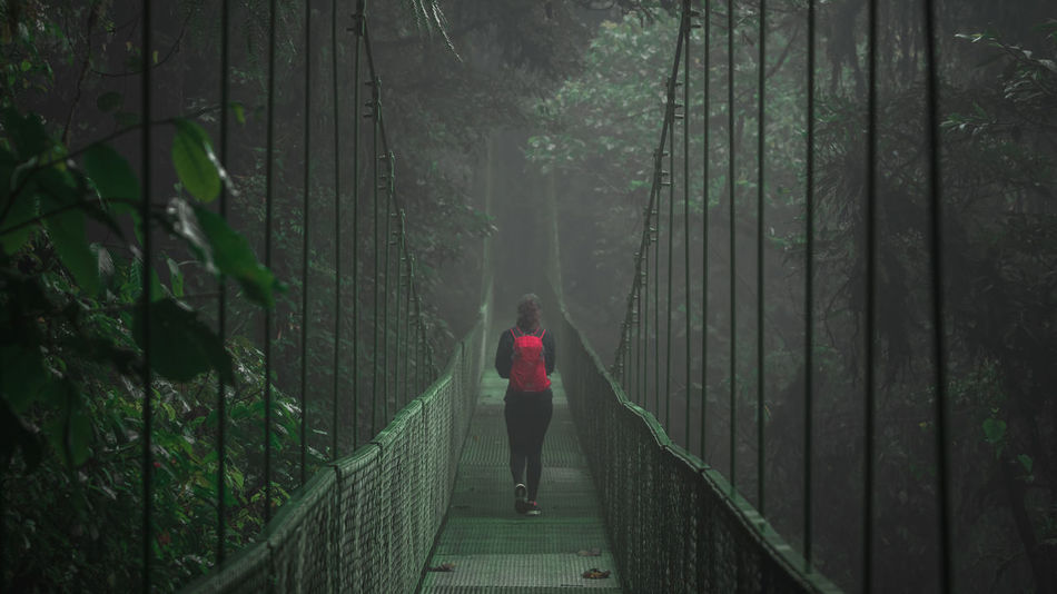 Suspension bridges in Santa Elena, Costa Rica. One Person Only Adult Bamboo - Plant Bamboo Grove Beauty In Nature Day Forest Full Length Green Color Growth Leisure Activity Lifestyles Nature One Person Outdoors People Real People Rear View Scenics Suspension Bridge The Way Forward Tranquility Tree Walking Women