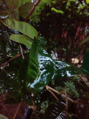Animal Themes Leaf Nature Animals In The Wild One Animal No People Green Color Reptile Water Day Outdoors Tree Aquarium Close-up Beauty In Nature Sea Life Wet Leaf Water_collection Water On Leaf Growth Plant Focus On Foreground Freshness