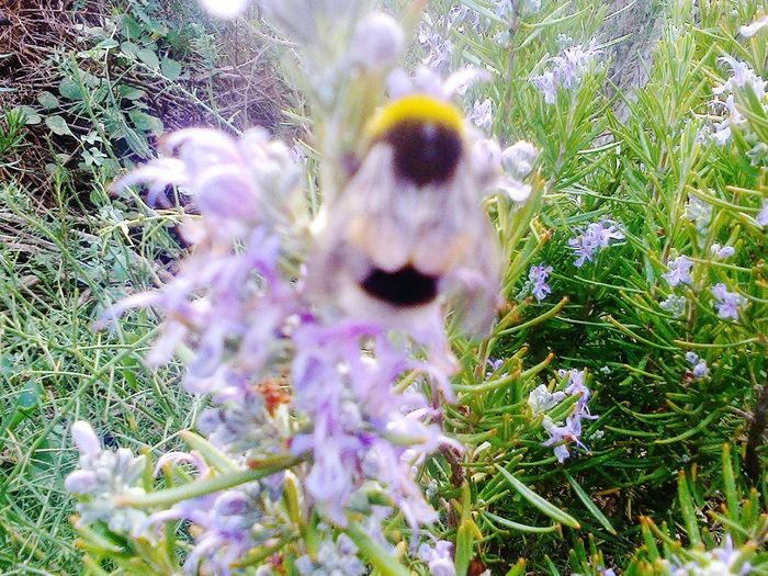 First Eyeem Photo Bzzzzz🐝🐝🐝 Abeille Fleurs Bzzzz Capture The Moment Cool FUNNY ANIMALS Product Photography Mie