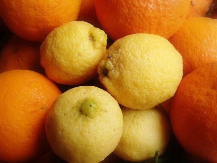 Eyeem Fruits EyeEm Nature Lover Orange & Lemon Fruits_collection