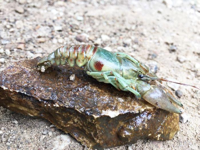 Seafood Close-up Rock Outdoors