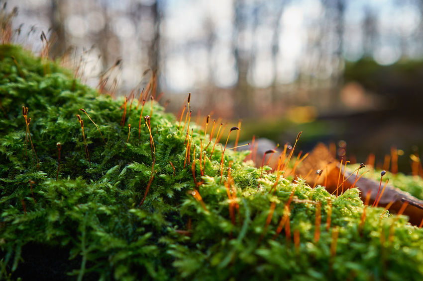 autumn in colors Silence EyeEm Nature Lover EyeEm Gallery Landscape Tree Trunk Moss Bokeh Depth Of Field Mood Autumn Fall Fall Beauty Close-up Autumn In Colors Lucky's Colors Forest Woods Nature Growth Outdoors Plant Beauty In Nature Close-up Tree Freshness
