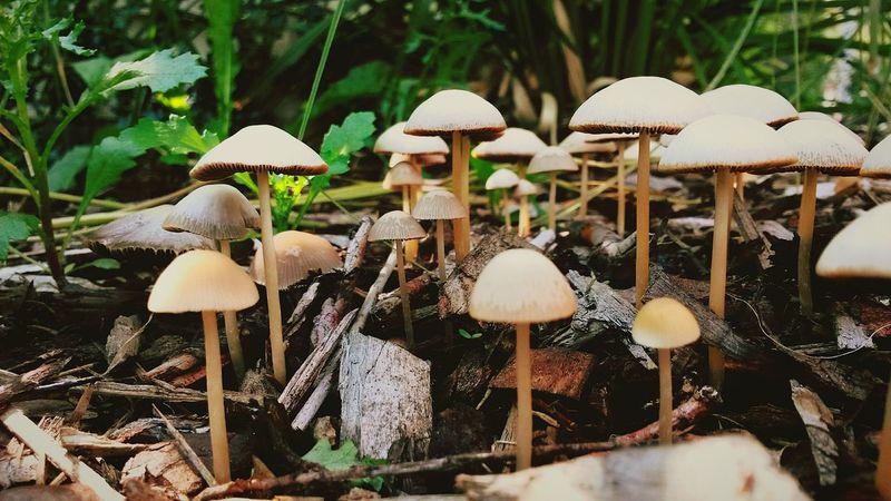 Taking Photos Mushrooms Nature Backyard Flowers,Plants & Garden