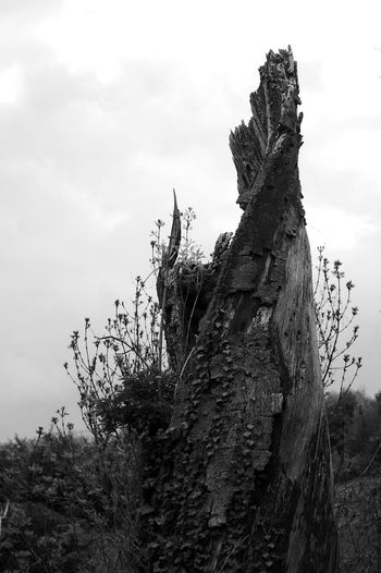 The Dead Reaching Plant Tree Sky Cloud - Sky Nature Tranquility Day Bark Tree Trunk Trunk Growth Dead Plant Blackandwhite Black And White Swanmore Lake