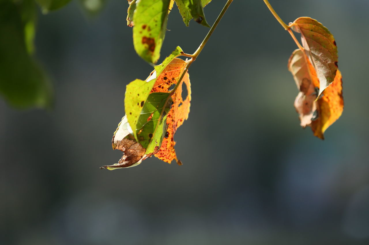 Close-Up Of Yellow Leaves On Branch