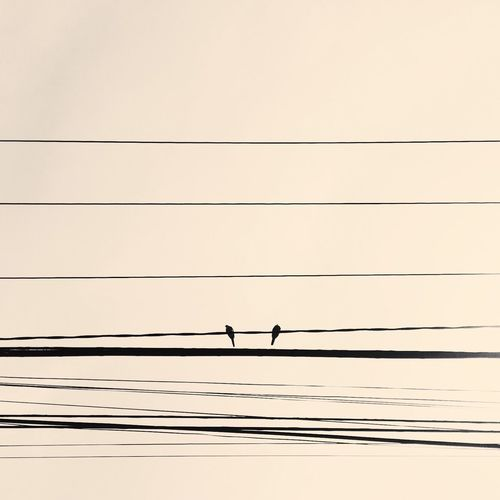 Minimal Pastel Power Minimal Birds Bird Photography Birds_collection #sky Wires Wires In The Sky Minimalism