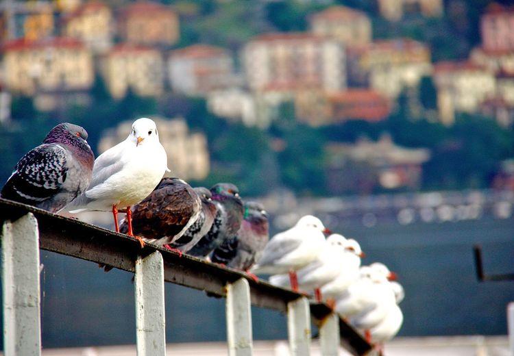 Align Birds Chirp Como Happy Happybird Houses Lake Lakecomo Notinorder Oddoneout Pattern