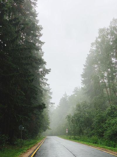 Tree Plant Road