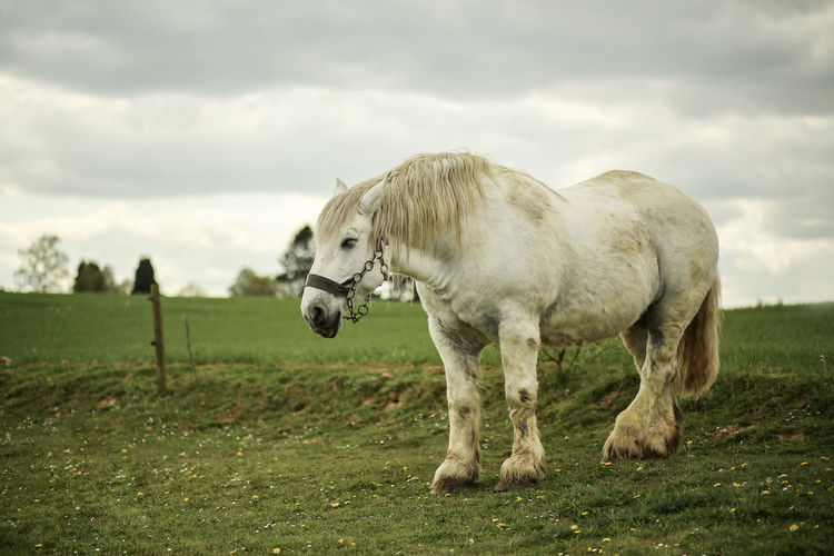 Clouds Farm Life Horse Horse Photography  Horseriding On The Beach Stable White Horse Portrait