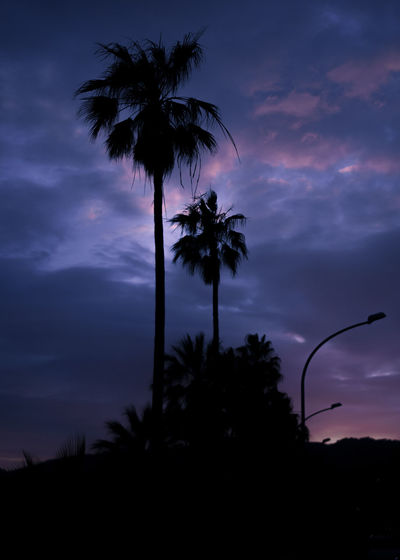 Sky Tree Cloud - Sky Plant Silhouette Tropical Climate Palm Tree Beauty In Nature Scenics - Nature Sunset Nature Growth Tranquil Scene Low Angle View Tranquility No People Dusk Outdoors Dramatic Sky Coconut Palm Tree