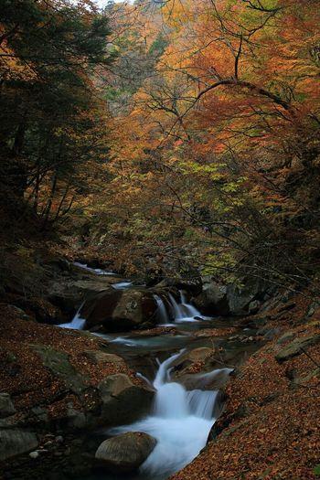 紅葉狩り🍁 Autumn Landscape Nature Eyemnaturelover Japan Outdoors Waterfalls Enjoying Life Popular Photos Photography