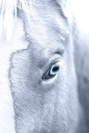 Black&white Close-up Detail Of Horse Horse Horse Detail Horse Ear Horse Eye Horse Head Monochropm