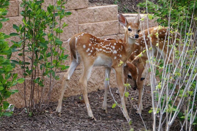 Deer part 3 Mammal Outdoors Nature Animals Barracks Close-up Nature Animal Wildlife Deer Animals In The Wild