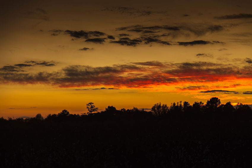 Warm & Colorful Sunset Black Clouds Colors Forest Landscape, Orange Relaxing Sky Sunset Trees Warm Yellow