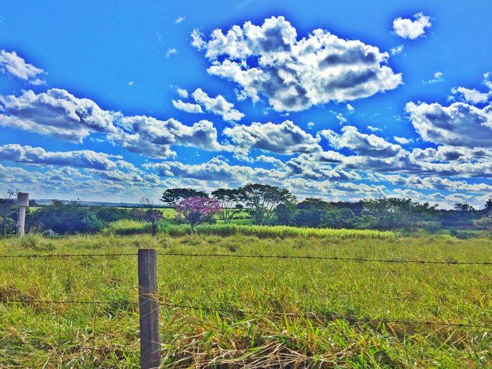 🌲🌴🌵🍄 Landscape Landscape_Collection Peace Wildlife