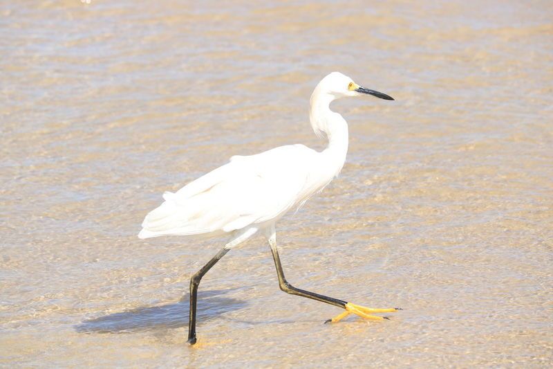 Animal Themes Animal Wildlife Animals In The Wild Bird Crane - Bird Day Egret Full Length Great Egret Heron Nature No People One Animal Outdoors Perching Water