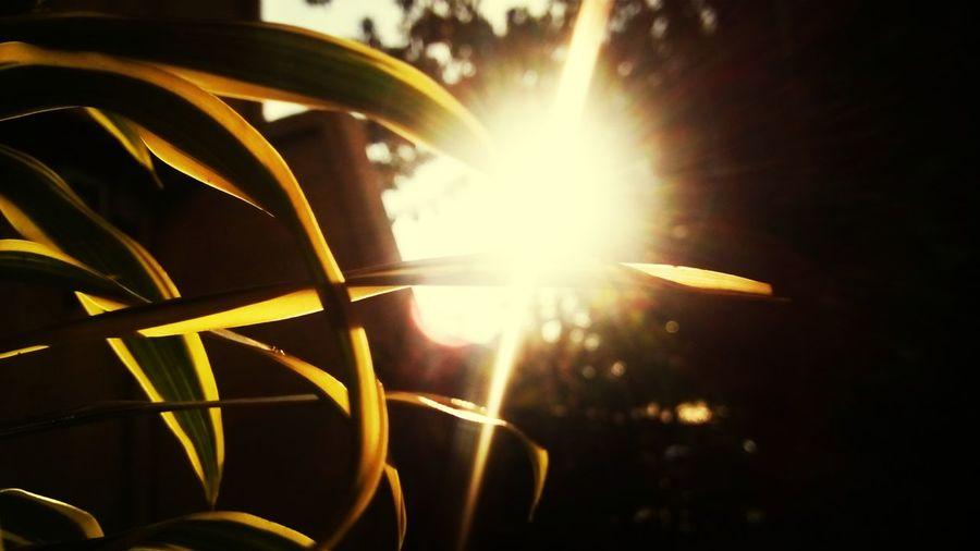 Mr.Sun Flares2 Phtography