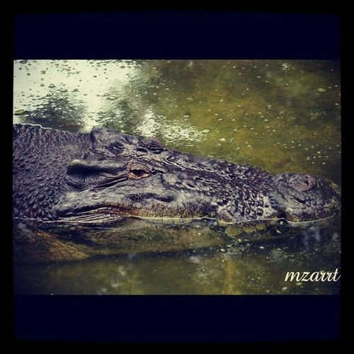 @skylaura Crocodilesfarmkch Weekendouting Sarawak Bujangsenang bersantai santai dia hehe