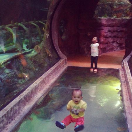 I guess this was their favorite tank! Sharktank Up Down Allaround GrapevineSeaLife Mylestone LilosWorld