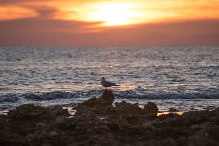 Sunset Sky Water Sea Beauty In Nature Orange Color Scenics - Nature Rock Nature Beach Solid Horizon Over Water Land Vertebrate Bird Cloud - Sky Animal Rock - Object Animal Wildlife No People Outdoors Puglia Puglia South Italy Italy South Italy