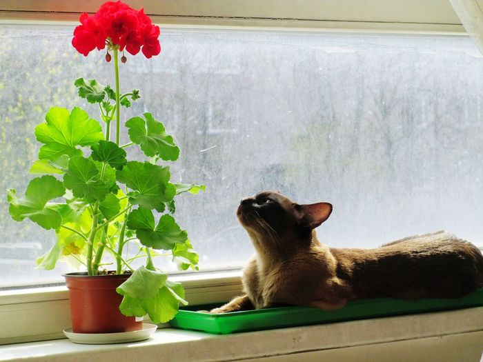 Flower / čiahavi Enjoying The View, Enjoying Life, Enjoying The Sun, Enjoying Nature. / Check This Out