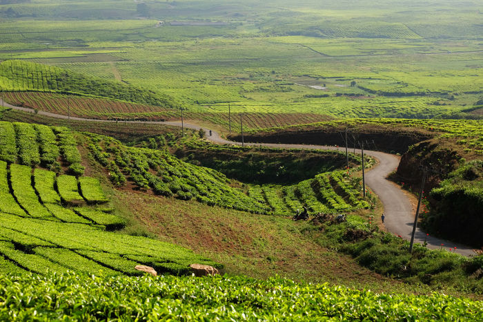 Kerinci tea plantations INDONESIA Jambi Road Sumatra  Tea Agriculture Beauty In Nature Black Tea Day Field Greeen Tea Field Green Color Green Tea High Angle View Kerinci Landscape Nature No People Outdoors Patchwork Landscape Scenics Sky Tranquil Scene Tranquility Travel Destinations