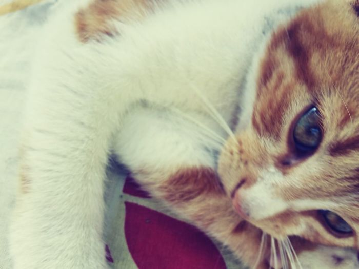 Pets Cat♡ Love❤ Eye4photography  One Animal Animal Body Part Animal Hair Animal No People Day Cat Lovers