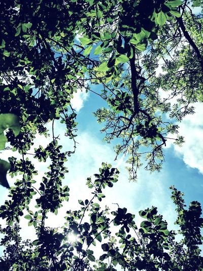 Look Up Tree Nature Low Angle View Forest Branch Leaf Beauty In Nature Outdoors No People Sky Day Growth Tree Area Freshness EyeEm Nature Lover Sunlight Cloud - Sky Growth Fragility Kent Countryside Green Color Tree Beauty In Nature Nature Nice Touch