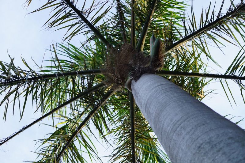 Beauty In Nature Close-up Day Low Angle View Nature No People Outdoors Palm Tree Sky Tree
