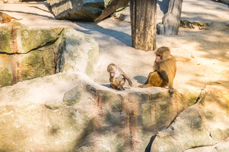 Monkeys sitting on the rocks. Sunny day Monkeys Animal Wildlife Animals In The Wild Day Group Of Animals Mammal Nature Outdoors People Primate Relaxation Rock Rock - Object Sitting Solid Sunlight Two Animals Vertebrate Zoo