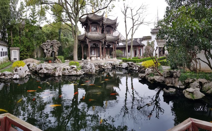 #spiritual #Chinese #love #peace #travel #missing You Tree Water Reflection History Architecture Building Exterior Sky Built Structure Ancient Civilization