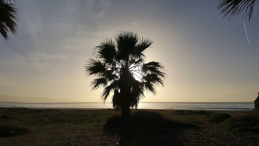 Silhouette palm tree at beach against sky during sunset