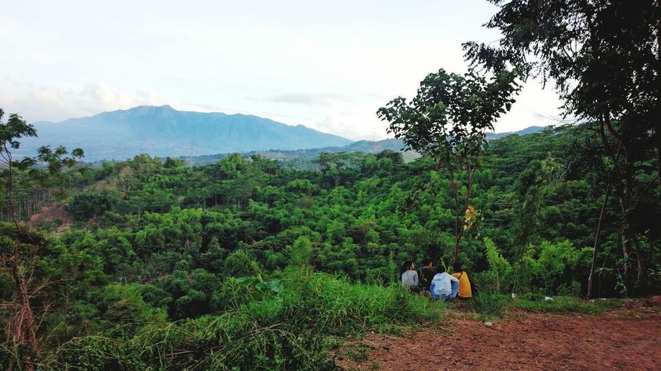 taman love view Tree Nature Growth Green Color Agriculture Day Outdoors