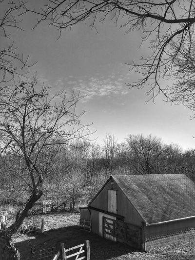 Blackandwhite Barn Bare Tree Built Structure Tree Architecture No People Building Exterior Sky Day Branch Outdoors Tranquility Nature Beauty In Nature